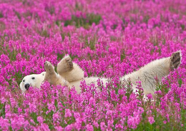 Amikor a maci lilákkal álmodik - Cuki medvék virágok között