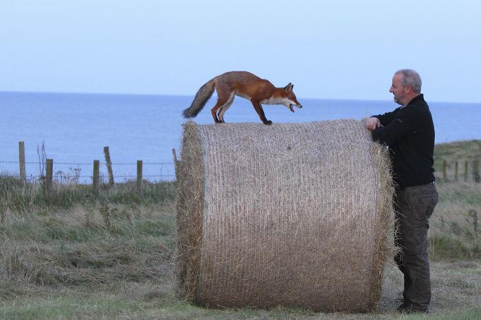 orphaned-fox-photography-mark-strachan-peter-lewis-1-5e37d0ec4c29c_700.jpg
