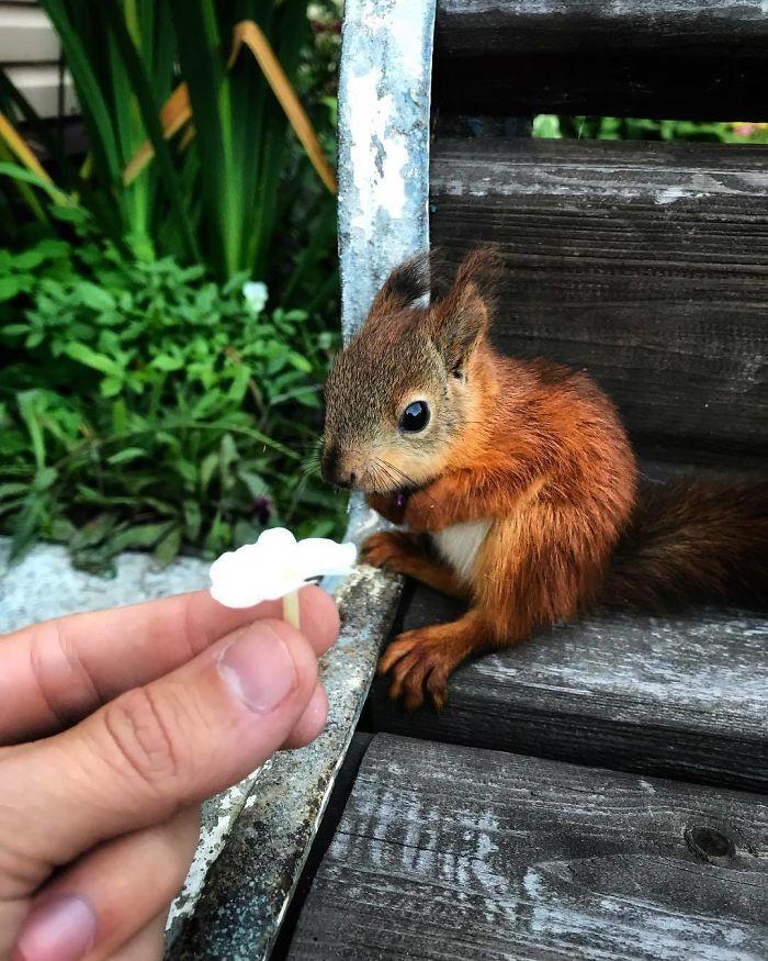 rescue-squirrel-chippy-igor-grishin-1-5de780cf07d52_700.jpg