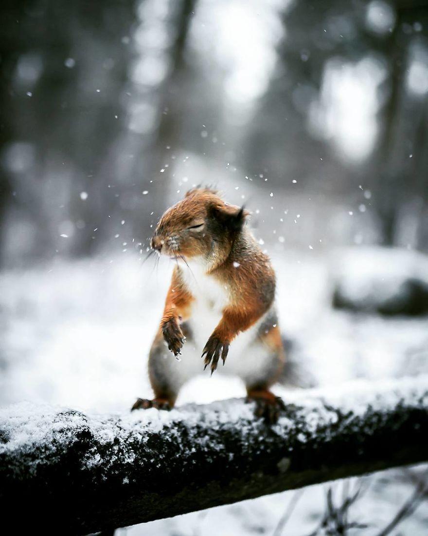 wildlands-animal-photography-joachim-munter-finland-1-5a43ad443440b_880.jpg