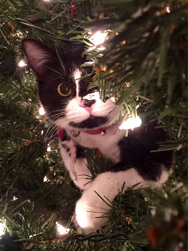 decorating-cats-destroying-trees-christmas-401_605.jpg