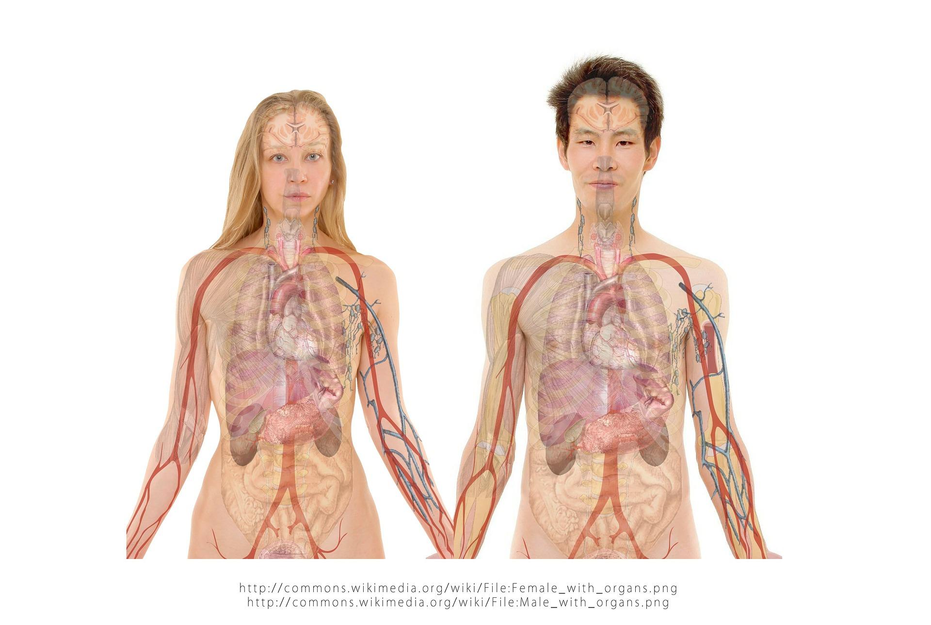 anatomia_no_ffi.jpg