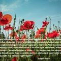 Napi idézet - nagy igazság