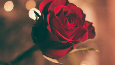 Romantika hete ...