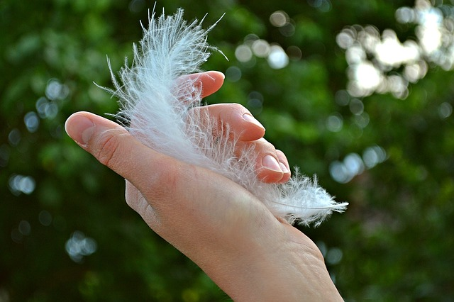feather-1078424_640.jpg