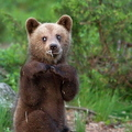 Bújj, bújj medve... Vajon kijön 2-án?