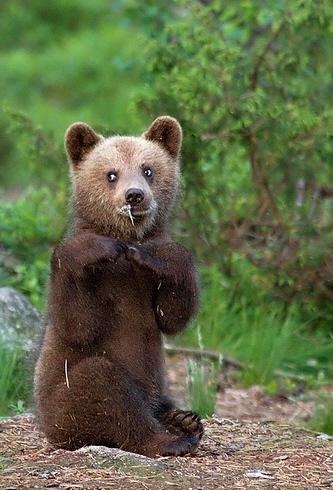 Medvebocs 01.jpg