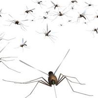 Így készülj az idei extrém szúnyoginvázióra