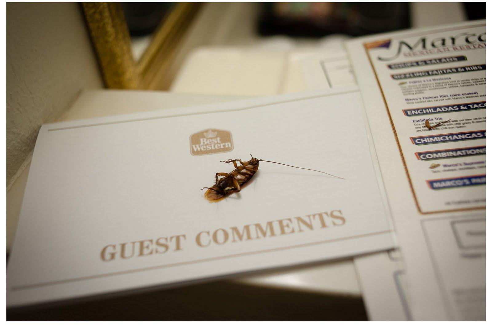 houston-roach_MAY1333-blog.jpg