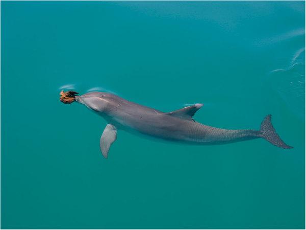 delfin_1_ááááá.jpg