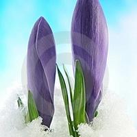 Tavaszi Napforduló