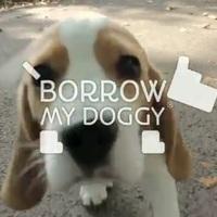 Új őrület: kutyakölcsönzés