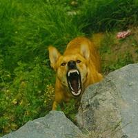 Mit tegyünk, ha ránk támad egy kutya?