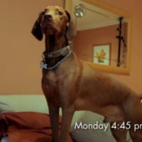 Ezért tudják a kutyák, hogy mikor jövünk haza?  - videó