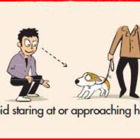A bátor járókelők veszélyesebbek, mint akik félnek a kutyáktól