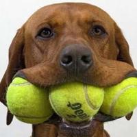 Lenyelték a labdánkat – ne várjatok a neveléssel!