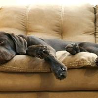 Kutyafekhely – vegyünk vagy csináljunk? Tippek olcsó megoldásokra