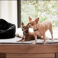Amerikai őrület – amikor kutyaházzá válik az egész lakás