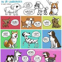 Vaú 14 nyelven