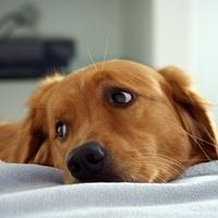 """""""A kutya tudja, mi a jó neki"""" - avagy az életveszélyes gazdák"""