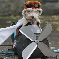 Külföldre utazunk a kutyával - fontos szabályok