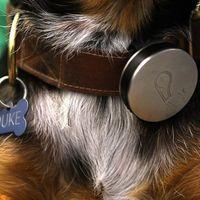 Áprilisban érkezik a Whistle kutyakövető nyakörv - videó