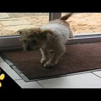 Lábtörlőt használ a legudvariasabb kutya - videó