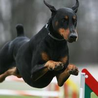 Legnépszerűbb kutyafajták 2 – akik kimaradtak a top tízből