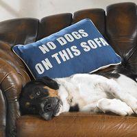 Kutya a lakásban - így takaríts, és nem lesz büdös