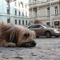 Hogyan találjuk meg elveszett kutyánkat? – A legjobb tippek