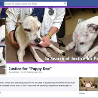 Brutális kegyetlenség – Nekiugrottak az állatbarátok  a Craigslistnek