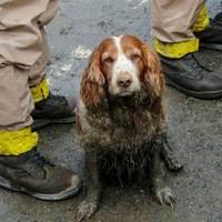 Így dolgoznak a mentőkutyák a washingtoni földcsuszamlás után
