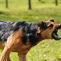 Verekednek a kutyák – mikor avatkozzunk közbe?