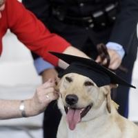 Új iskola terrorelhárító kutyáknak – Lediplomázott az első osztály
