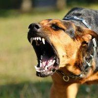 Agresszív kutyák – ijesztő adat a gazdák felelőtlenségéről