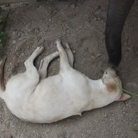 Egy labi nem hagyja csak úgy felébreszteni magát :)
