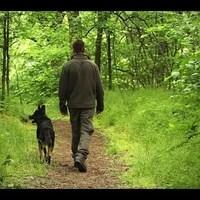 Parlagi sasok védelmére tanítják a kutyákat Dunakeszin - videó