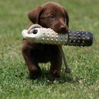 Napi abszurd: Nem nevelem a kutyát, mert még túl fiatal