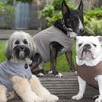 Pólóval az idegesség ellen – új kutyanyugtató találmány