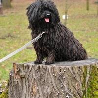 Párszáz forintos táp győzött a NÉBIH kutyatáp tesztjén