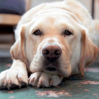 Minden kutyából életmentő lehet az új high tech nyakörvvel