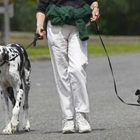 A séta és a közös tévézés a legjobb a kutyával
