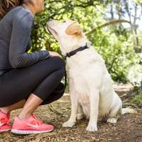 High tech kutyakövető kütyü elérhető áron