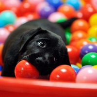 Létezik olyan kutya, amelyik nem szeret labdázni?