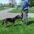 """""""Azt nézd"""" - tréning reaktív kutyáknak"""