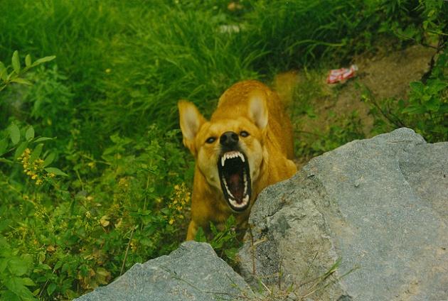 kutyaharapas.jpg