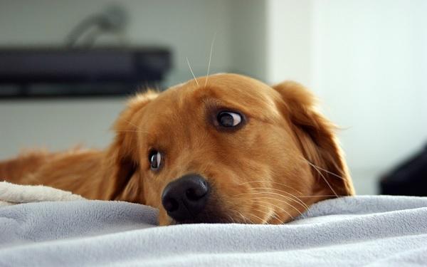 """ac01bdf27868 """"A kutya tudja, mi a jó neki"""" - avagy az életveszélyes gazdák - Neveljünk  kutyát"""