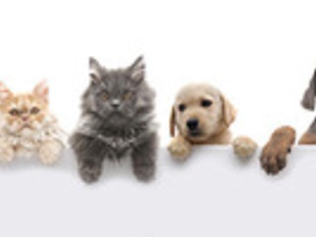 Az áttörés a nevelt gyermekeknél - és az állatterápia hatása