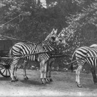 A brit arisztokrácia és az egzotikus állatok