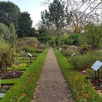 London Parks 1 - Romantikus gyógynövény ültetvény Chelsea szívében
